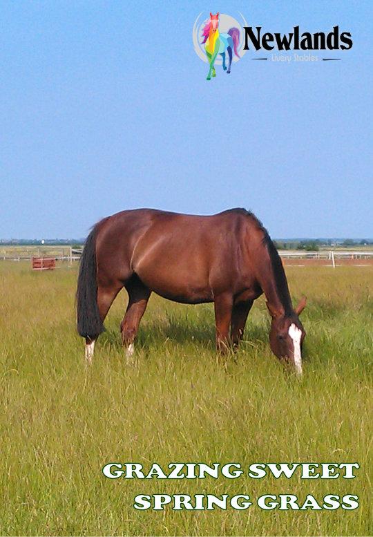 Winnie - Grazing Newlands Spring Grass